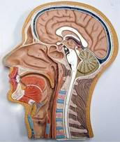Los Alamos Council on Cancer :: Head and Neck Cancer